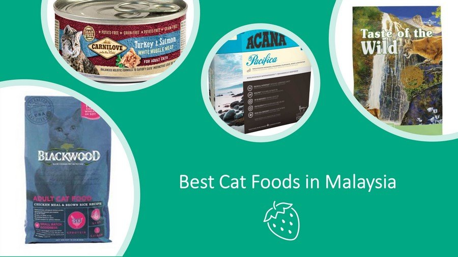 Best Cat Foods in Malaysia Review: Dry, Wet, Freeze-Dried image