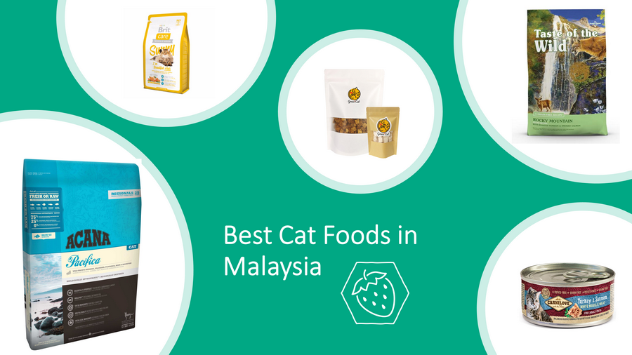 12 Best Cat Foods in Malaysia Which Put Your Cats in Heaven! image