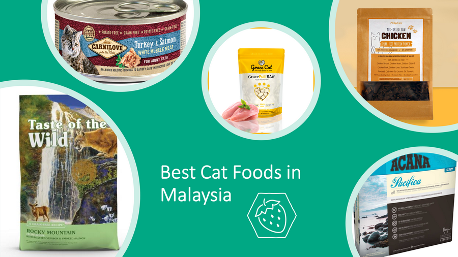 13 Best Cat Foods in Malaysia Which Put Your Cats in Heaven! image